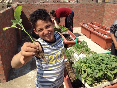 Learning about Plants and Roots Green Roof Phase II